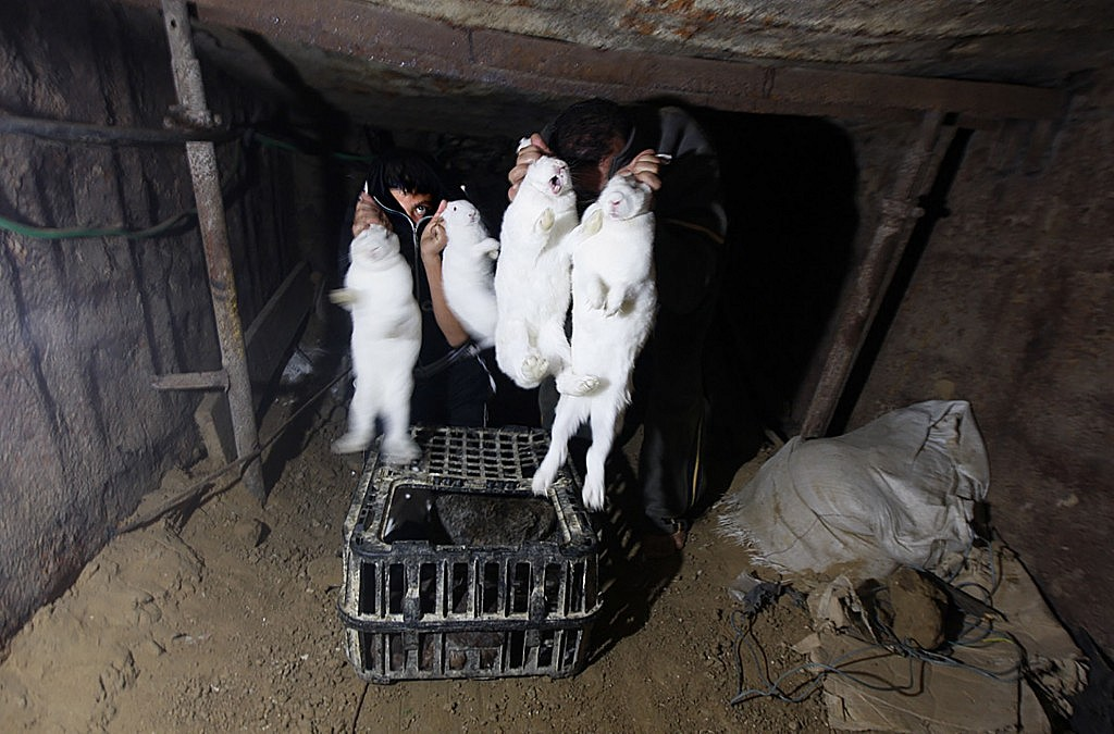 LW_Egyptian-boys-show-off-rabbits-given-to-them-by-a-Palestinian-man-unseen-in-an-underground-tunnel-linking-the-southern-Gaza-Strip-to-Egypt-on-November-21-2010-as-Egyptians-and-Palestinians-transform-the-network-of-tunnels-tha
